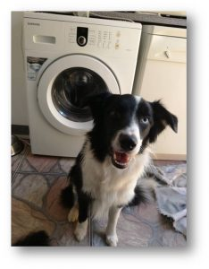 Scrappy by the washing machine. Doggie Journals.